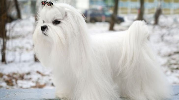 Here Are 2020's Top Dog Breeds For Seniors_11