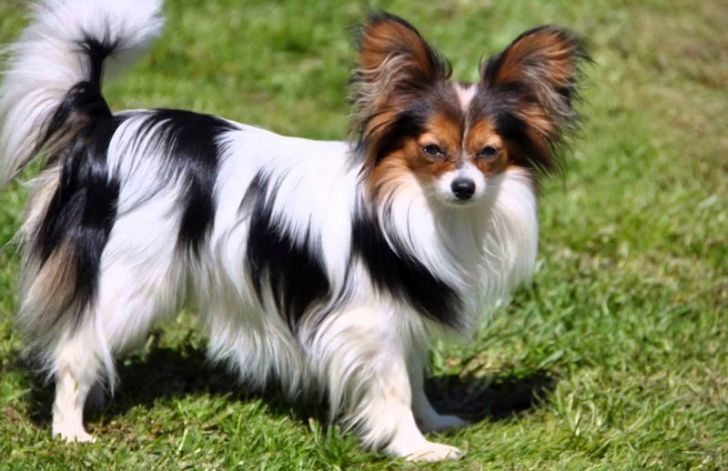 Here Are 2020's Top Dog Breeds For Seniors_12