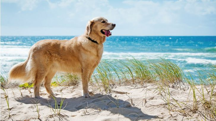 Here Are 2020's Top Dog Breeds For Seniors_14