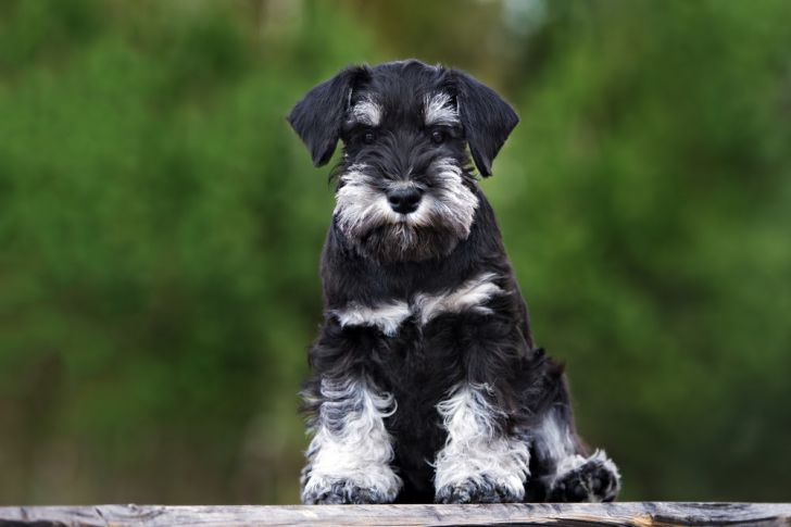 Here Are 2020's Top Dog Breeds For Seniors_16