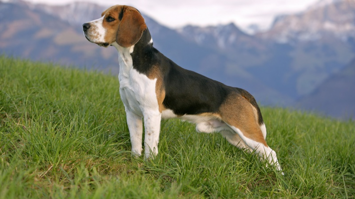 Here Are 2020's Top Dog Breeds For Seniors_2