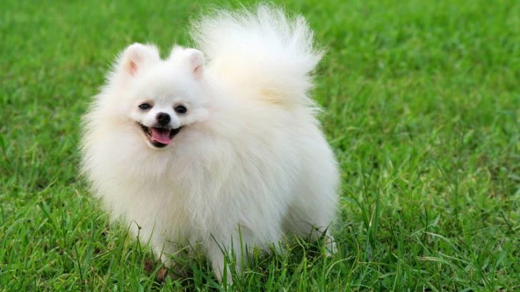 Here Are 2020's Top Dog Breeds For Seniors_7