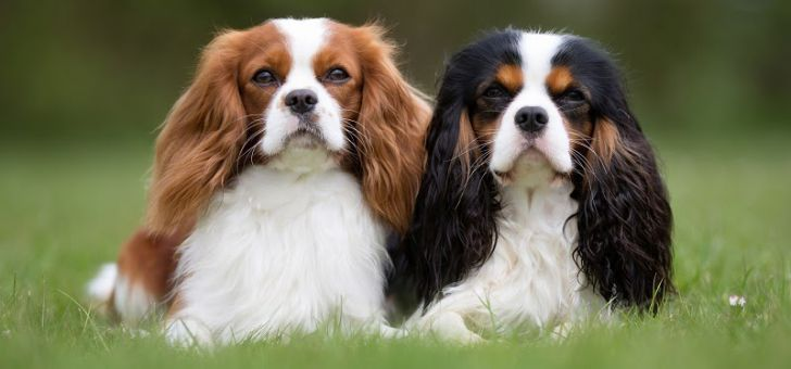 Here Are 2020's Top Dog Breeds For Seniors_8
