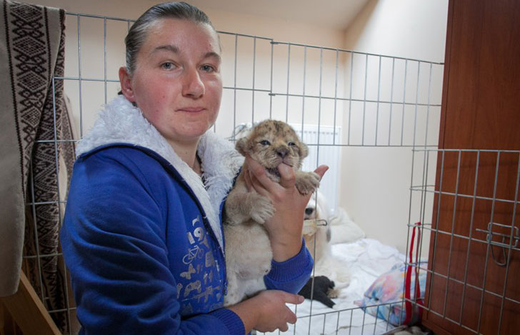 orphaned-lion-cub-was-in-want-of-a-mom-and-met-a-life-changing-companion_4