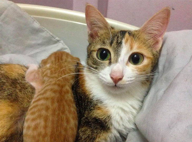 papa-cats-behaviour-shocked-everyone-on-the-internet-when-mama-cat-gave-birth-to-kittens_1
