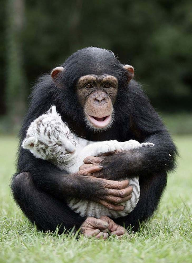 these-8-amazing-animal-friendships-will-melt-your-heart_10
