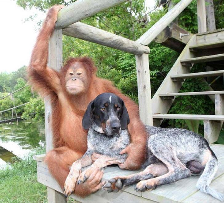 these-8-amazing-animal-friendships-will-melt-your-heart_15