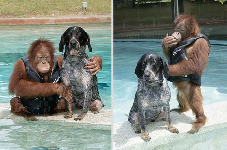 these-8-amazing-animal-friendships-will-melt-your-heart_16