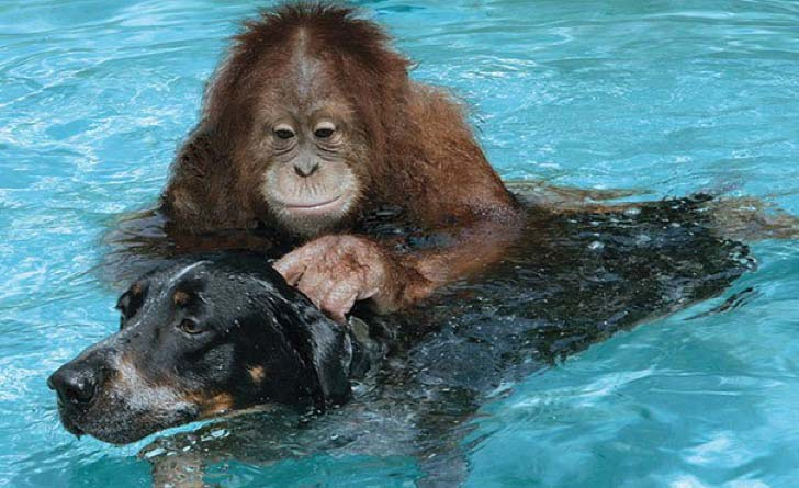 these-8-amazing-animal-friendships-will-melt-your-heart_17