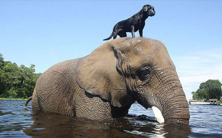 these-8-amazing-animal-friendships-will-melt-your-heart_18