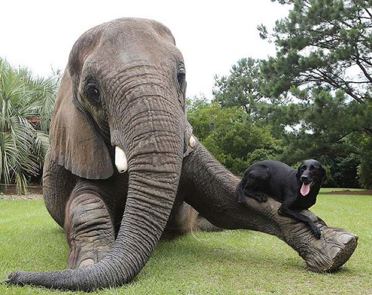these-8-amazing-animal-friendships-will-melt-your-heart_19