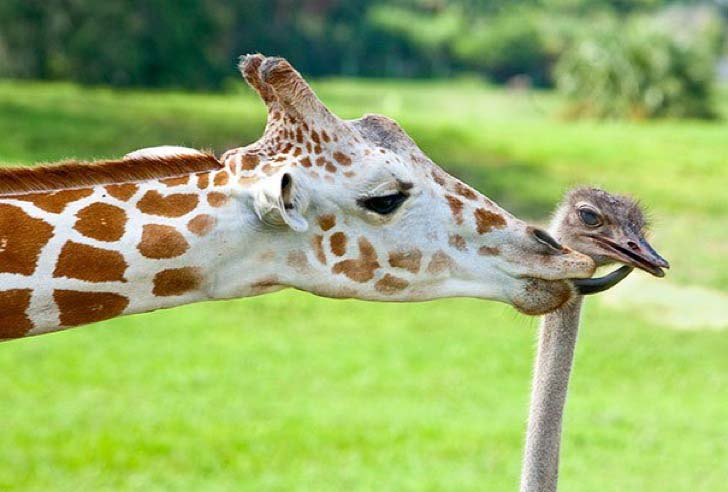 these-8-amazing-animal-friendships-will-melt-your-heart_21