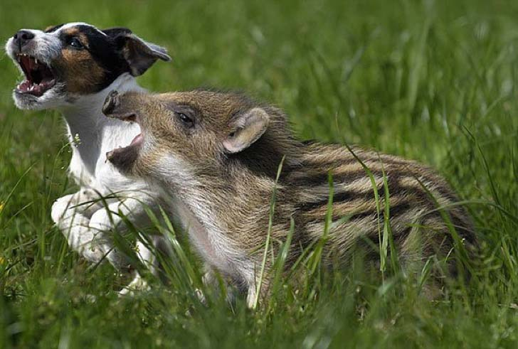these-8-amazing-animal-friendships-will-melt-your-heart_5