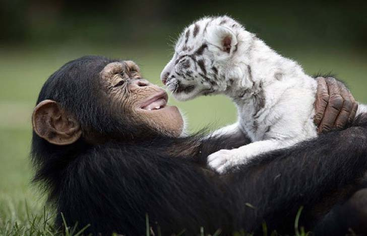 these-8-amazing-animal-friendships-will-melt-your-heart_7
