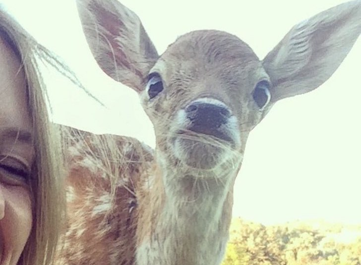 this-baby-deer-was-found-with-a-missing-leg-guess-what-happened-to-him-next_15