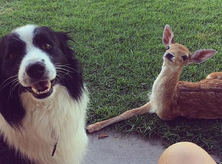 this-baby-deer-was-found-with-a-missing-leg-guess-what-happened-to-him-next_16
