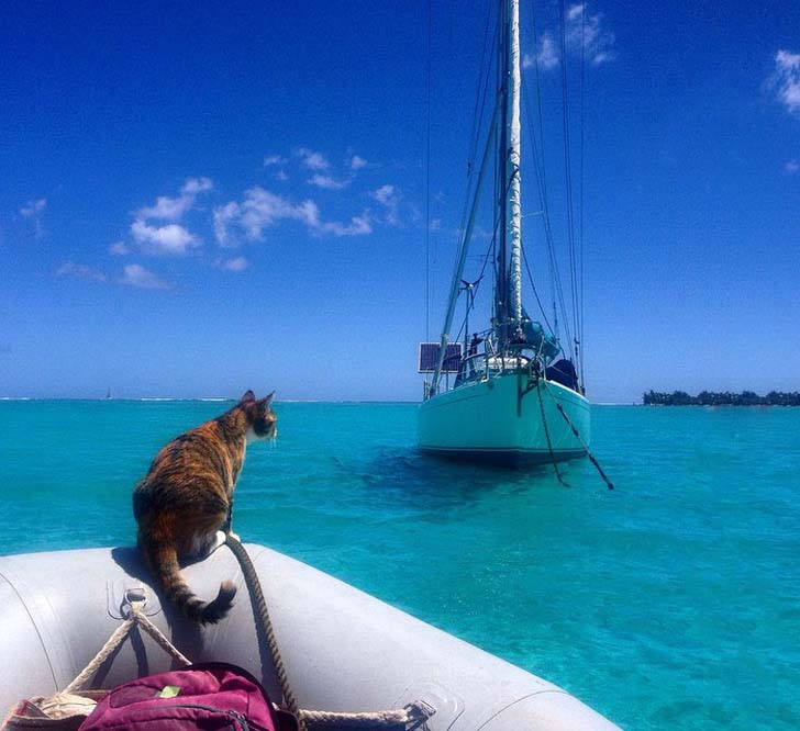 this-cat-travels-around-the-world-with-her-mom-who-quits-her-job_2