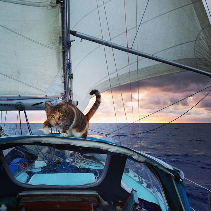 this-cat-travels-around-the-world-with-her-mom-who-quits-her-job_4