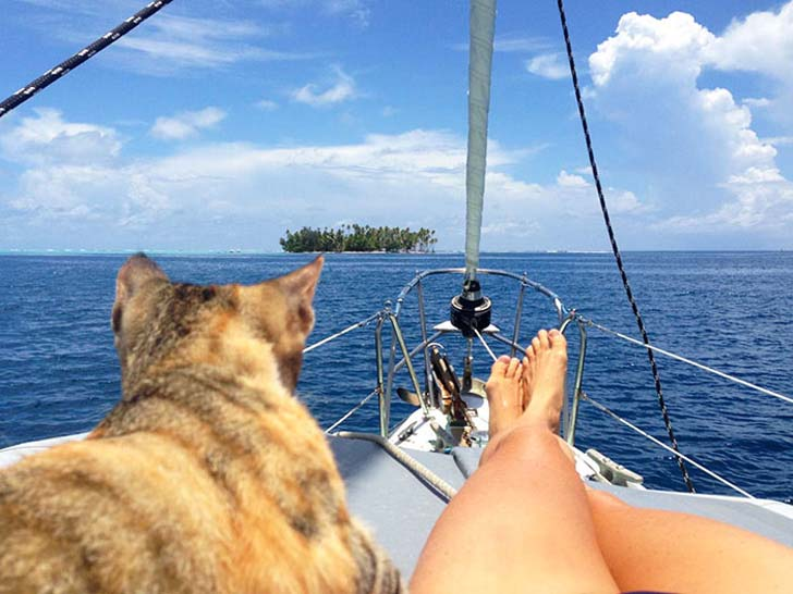 this-cat-travels-around-the-world-with-her-mom-who-quits-her-job_5