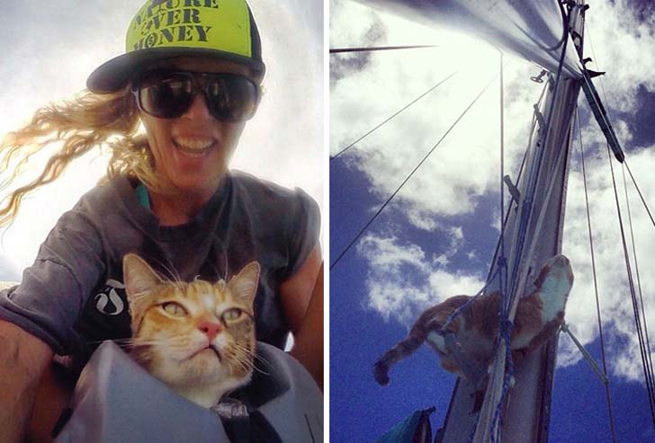 this-cat-travels-around-the-world-with-her-mom-who-quits-her-job_9