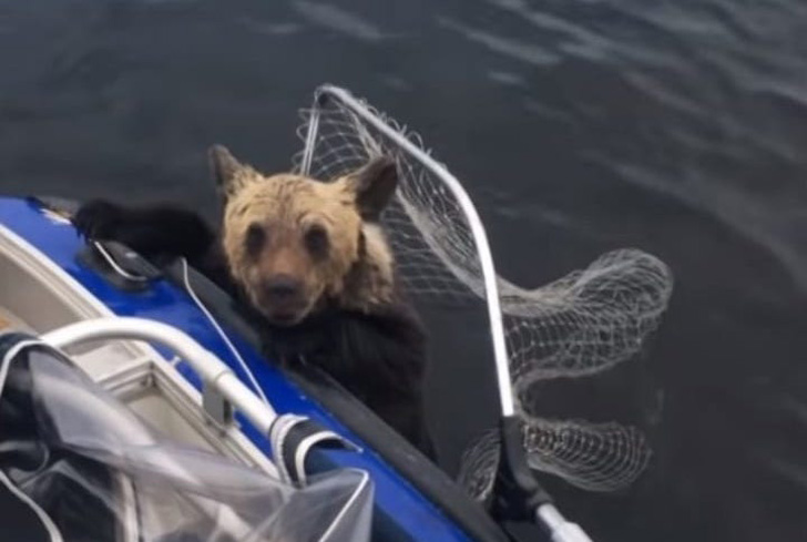 two-bear-cubs-left-to-drown-by-their-mother-are-miraculously-saved-by-unexpected_12