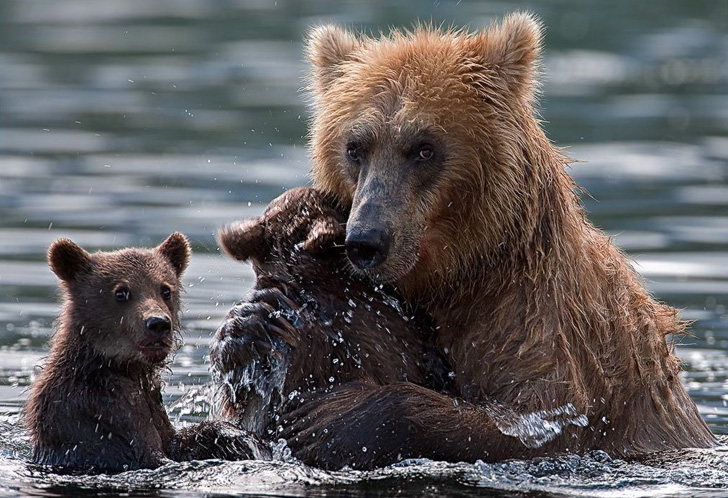 two-bear-cubs-left-to-drown-by-their-mother-are-miraculously-saved-by-unexpected_15