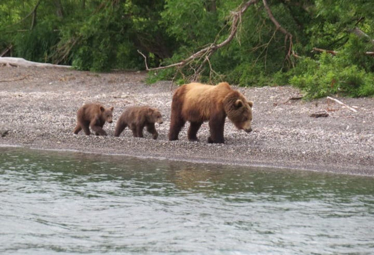 two-bear-cubs-left-to-drown-by-their-mother-are-miraculously-saved-by-unexpected_2