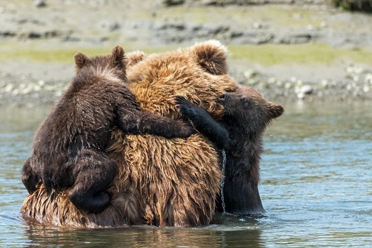 two-bear-cubs-left-to-drown-by-their-mother-are-miraculously-saved-by-unexpected_4