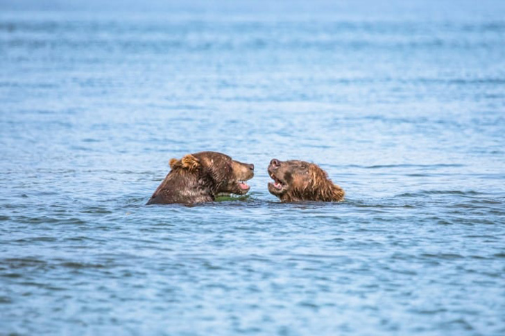 two-bear-cubs-left-to-drown-by-their-mother-are-miraculously-saved-by-unexpected_5