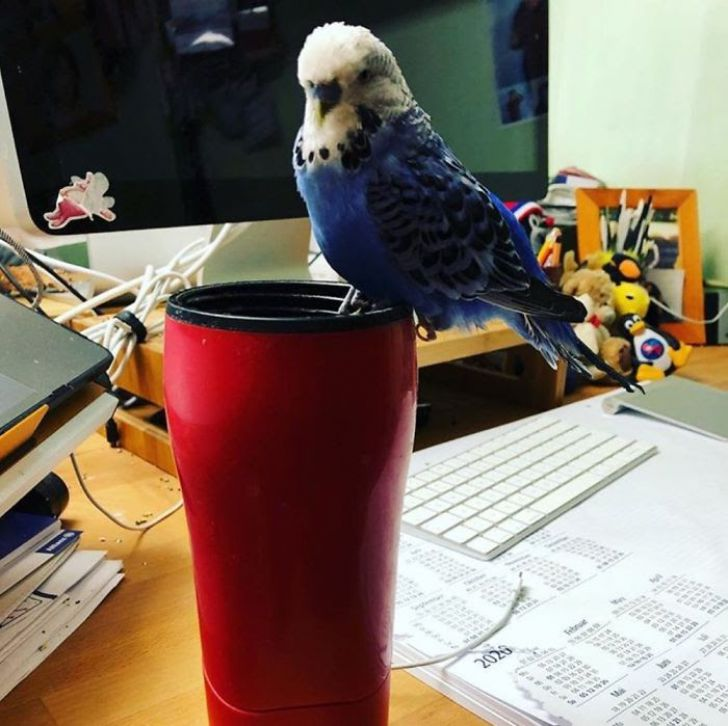 Working From Home: 20 Funny Moments Of Your Pet Colleagues_13