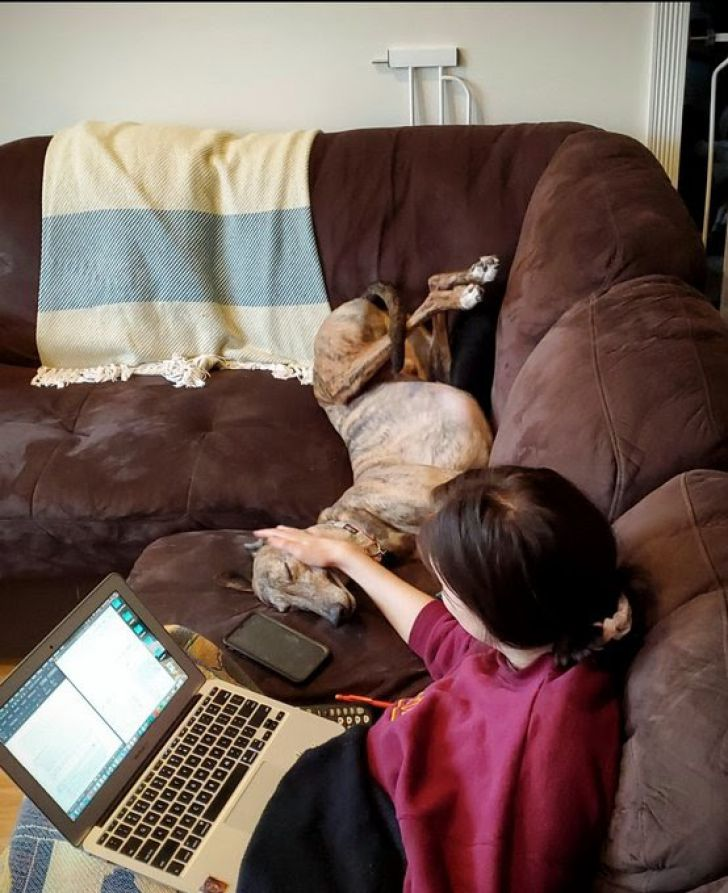Working From Home: 20 Funny Moments Of Your Pet Colleagues_15