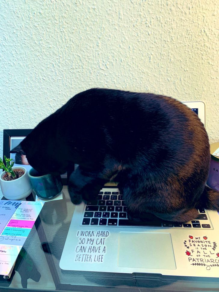 Working From Home: 20 Funny Moments Of Your Pet Colleagues_16