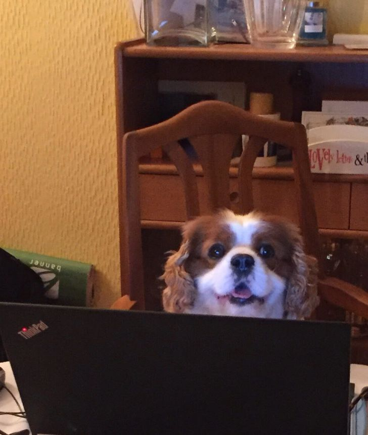 Working From Home: 20 Funny Moments Of Your Pet Colleagues_7
