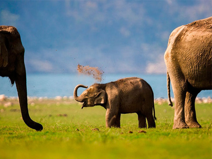 world-elephant-day-16-life-lessons-we-can-learn-from-elephants_16