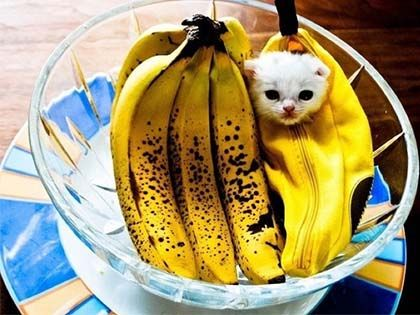 10 Amazing Facts About Bananas You Won't Believe