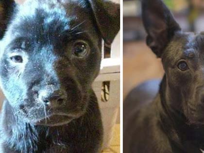 10 Rescue Dog Change That Will Restore Your Faith In Humanity