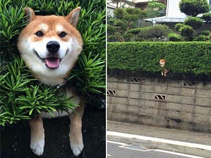 15 Animals Who Are Stuck But Pretending Everything's Fine