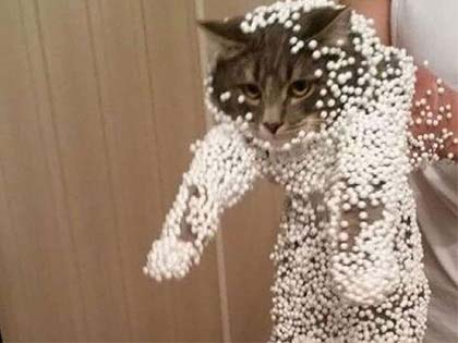 21 Cats Who Definitely Regret Their Decisions