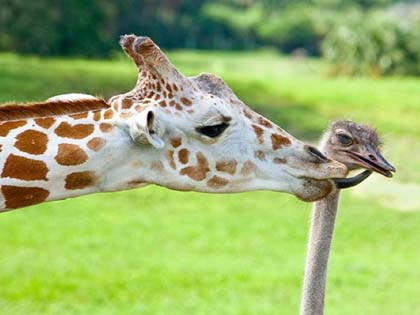 These 8 Amazing Animal Friendships Will Melt Your Heart