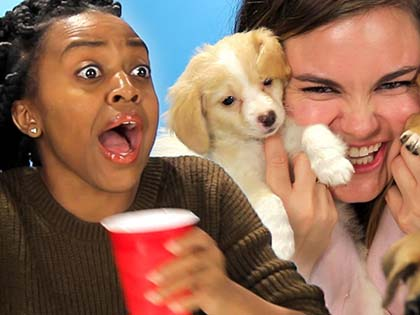 This Is How These Drunk Girls React When They Are Given A Bunch Of Puppies